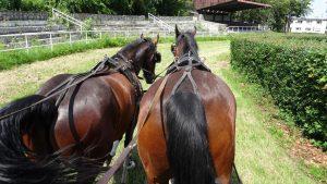 Rondje met paard en wagen
